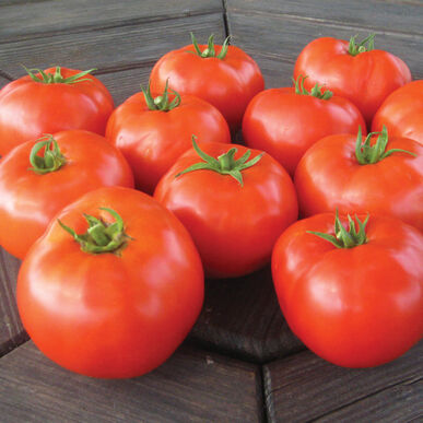 Mountain Merit Slicing Tomatoes