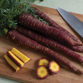 紫色的精英彩色胡萝卜