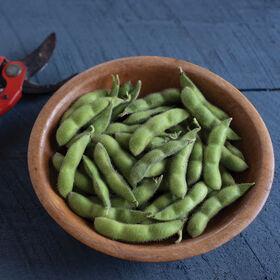 千叶绿色大豆