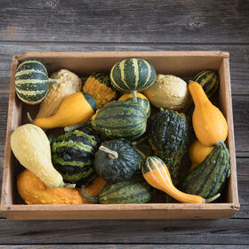 Ornamental Gourds (Small Mixed)