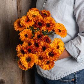 橙色纽扣金盏花