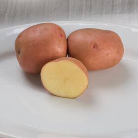 红金马铃薯