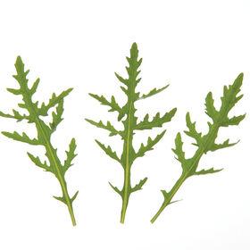 Sylvetta Arugula (Roquette)