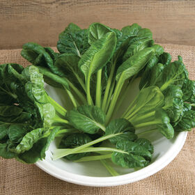Tatsoi Asian Greens