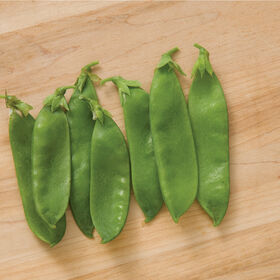 Avalanche Snow Peas