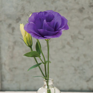 Mariachi Blue Pelleted F1 Lisianthus Seed Johnnys Selected Seeds