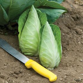 卡拉福新鲜市场卷心菜