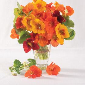 万花筒混合旱金莲
