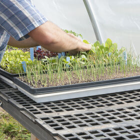 Seedling and Microgreens Bench - 2' W x 8' L Greenhouse and Tunnel Supplies