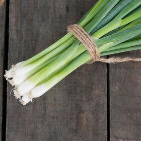 白色矛聚束洋葱