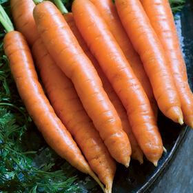 纳尔逊早期胡萝卜