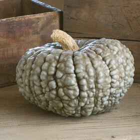 Marina Di Chioggia Specialty Pumpkins