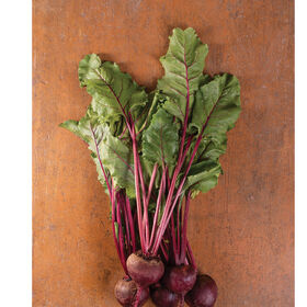 Early Wonder Tall Top Beet Greens