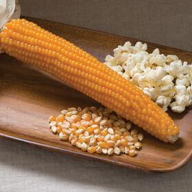 强劲的997干玉米