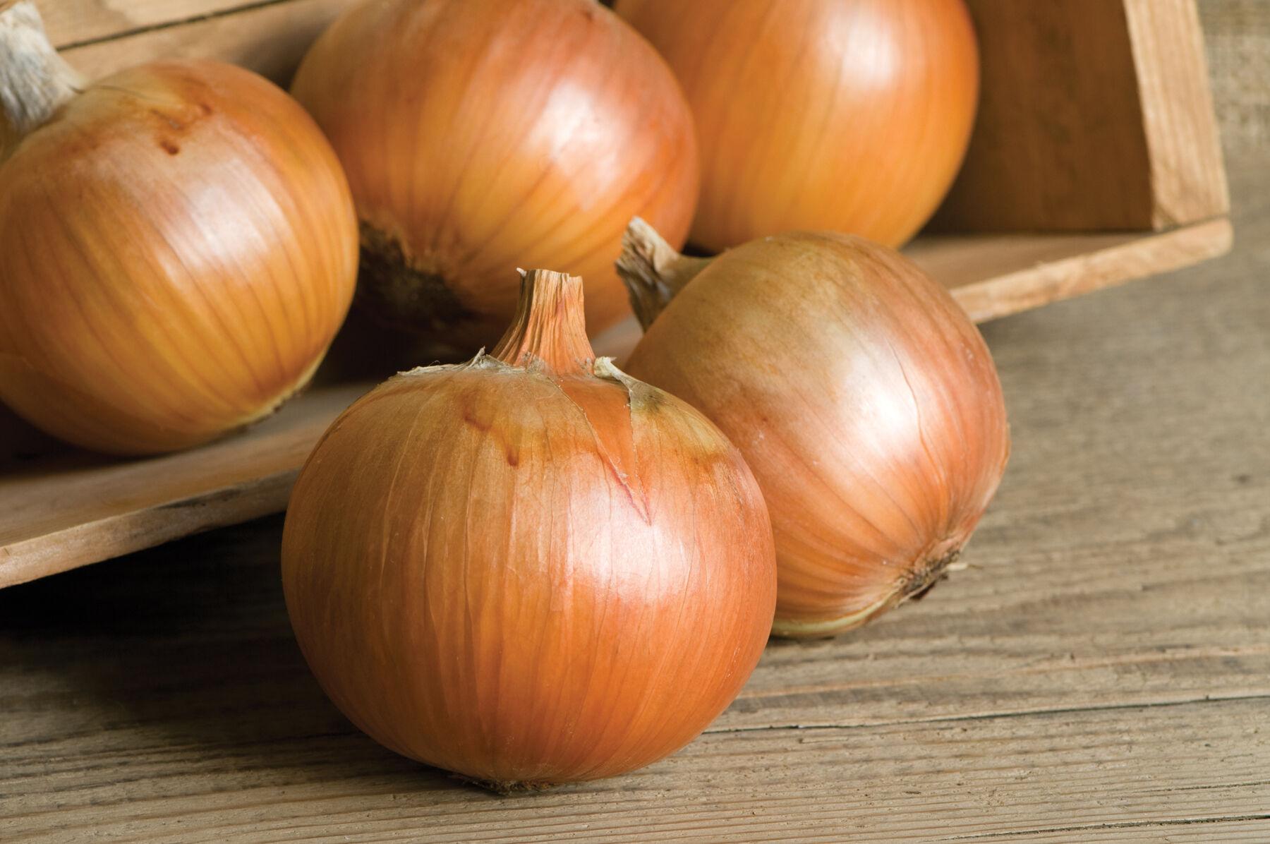 Onion Centurion: variety description, cultivation features and reviews 61