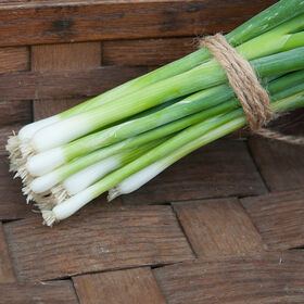 Parade Bunching Onions