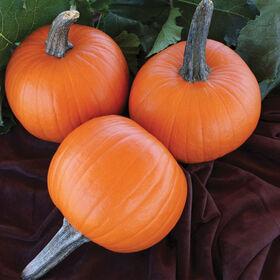 Jack Sprat Specialty Pumpkins