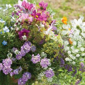 有益的昆虫诱食剂混合野花混合