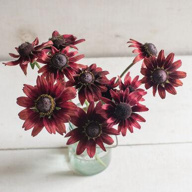 Cherry Brandy Rudbeckia (Black-Eyed Susan)