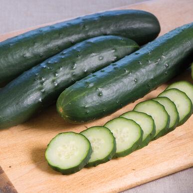 Corinto Slicing Cucumbers