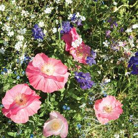颜色混合花集合和混合