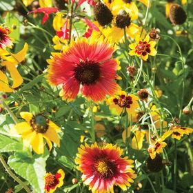 用节水技术栽培的花园混合美国东部野花混合