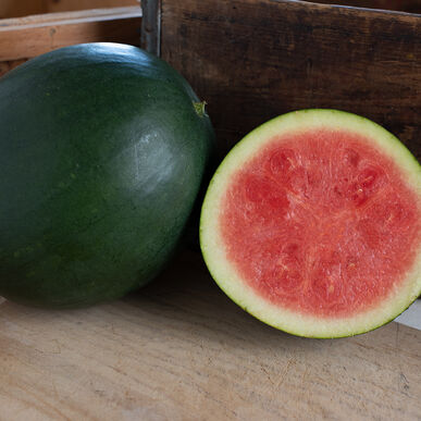 Chubbiness Triploid Watermelons (Seedless)