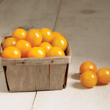Esterina Cherry Tomatoes