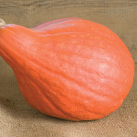 Red October Specialty Pumpkins