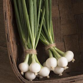 Pompeii Mini Onions