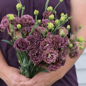 Rosanne Deep Brown Lisianthus