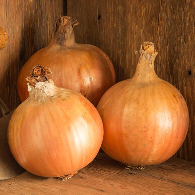 Yankee Full-Size Onions