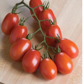 维罗纳粘贴西红柿