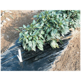 Black Mulch - 4' x 600', embossed. Solid Plastic (Polyethylene) Mulch