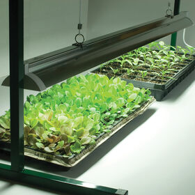 Value Jump Start Grow Light System - 4'