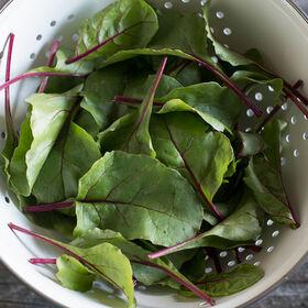 新的开始甜菜绿色