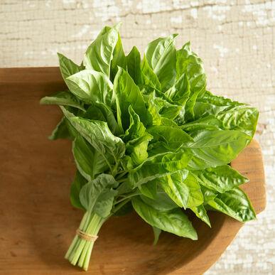 Newton Italian Large Leaf Basil