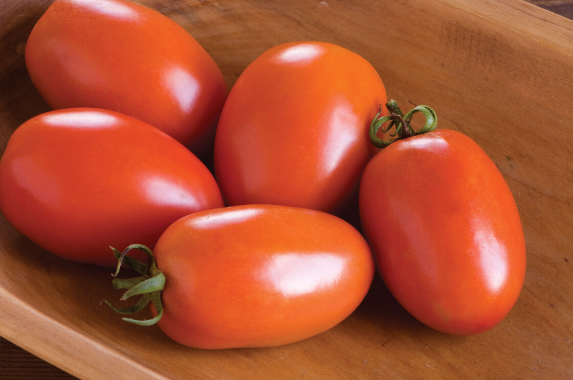 Tomato Seeds & Grafted Tomato Plants | Johnny's Selected Seeds