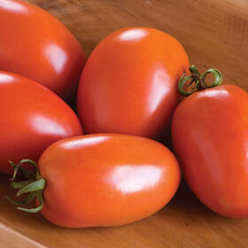 Amish Paste Paste Tomatoes
