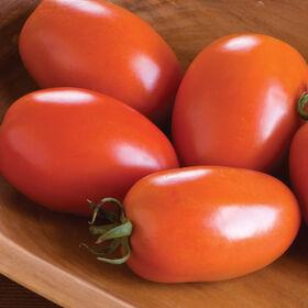 阿米什酱番茄