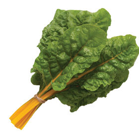 Orange Ribbed Swiss Chard