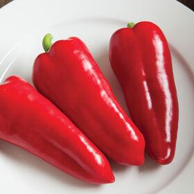 红豆科尼托甜椒