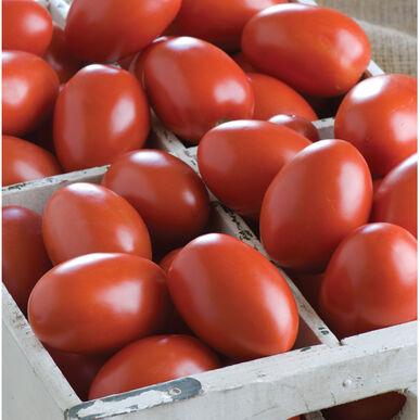 Granadero Paste Tomatoes