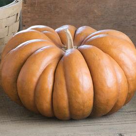 Musque de Provence Specialty Pumpkins
