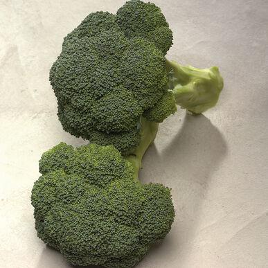 Diplomat Standard Broccoli