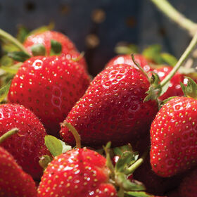 Elan草莓插头