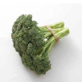 Atlantis Broccoli X Gailon
