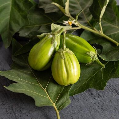 Comprido Verde Claro Brazilian Eggplants