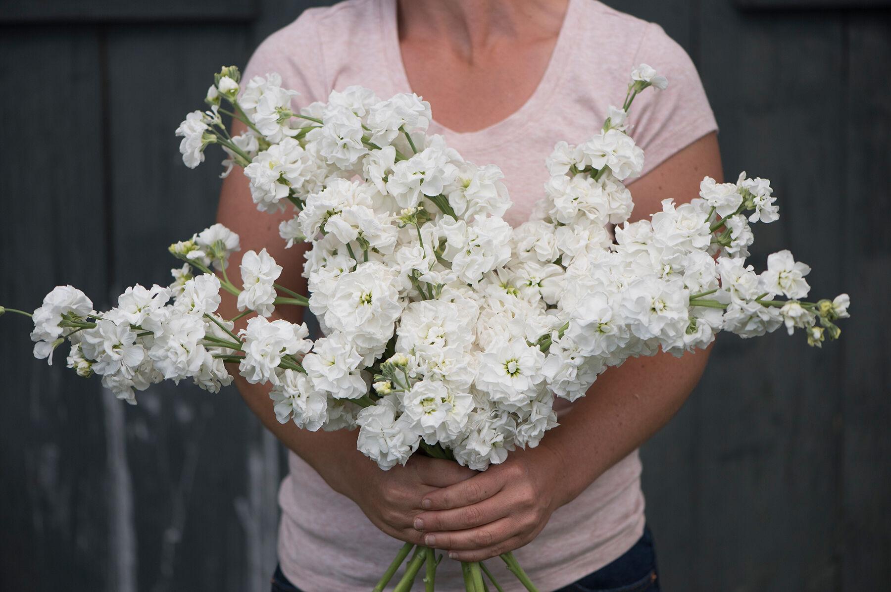 White stock flower