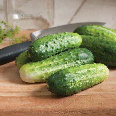 H-19 Little Leaf Pickling Cucumbers